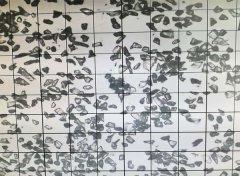 绿碳化硅微粉 6000#颗粒形状