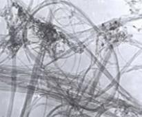 单壁碳纳米管,纯度+60%的图片